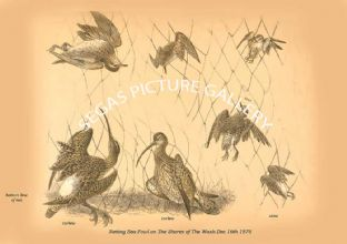 Netting Sea-Fowl on The Shores of The Wash Dec 16th 1876